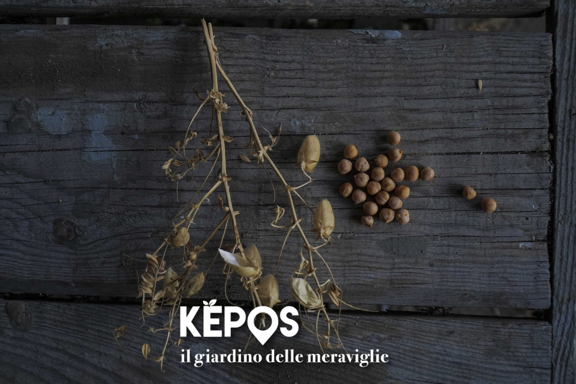 Kepos il giardino delle meraviglie - Il giardino delle meraviglie ...